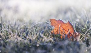 cold weather frost leaf winter fall